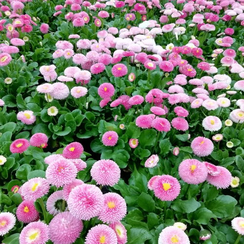 Bild zum Weblog Zu Besuch in der Gärtnerei