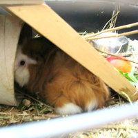 Bild zum Weblog Klassentiere