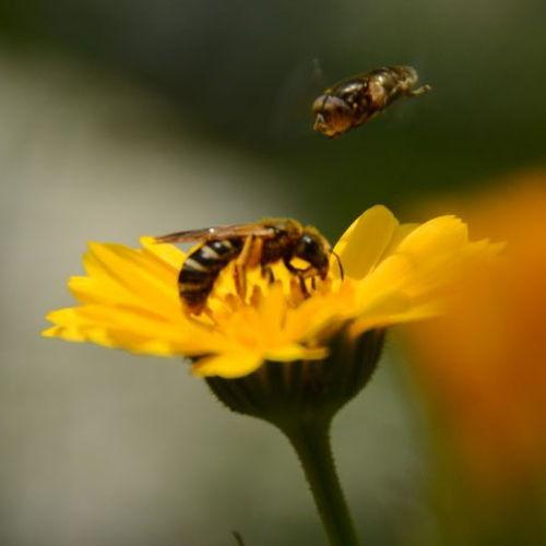 Bild zum Weblog Impressionen aus dem Schulgarten