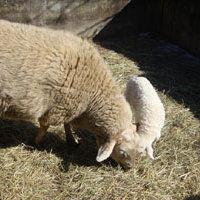 Bild zum Weblog Einfach tierisch ...