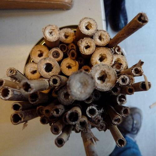Bild zum Weblog Wildbienen